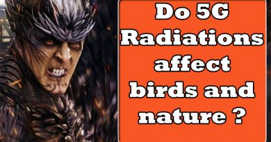 Effects of 5g on nature, do 5g affect the birds and nature, affect of 5g on bird