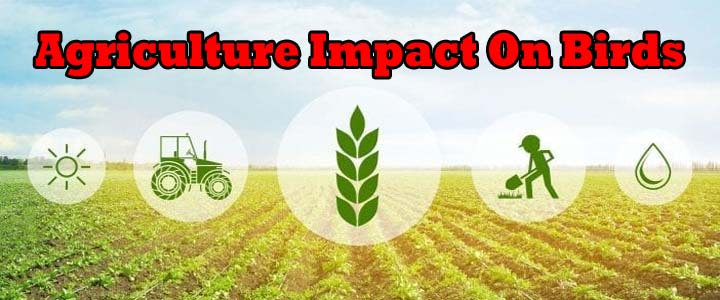 effects of 5g on agricultural feilds and humans and nature